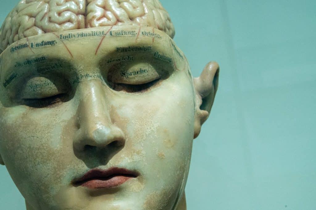 Model of the Human Brain